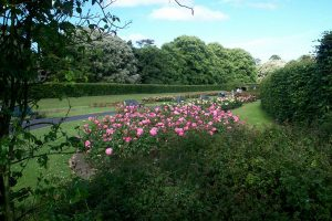 Rose Garden blossoming in St Anne's Park